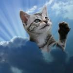 02ceilingcat-thumb-375x358