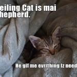08ceilingcatshepherdallineed
