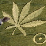 Are Stoned Wallabies Making Crop Circles