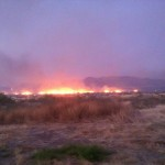 Austin News Wildfire