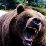 Bear Attack In Pennsylvania