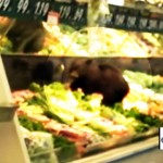 Bear Cub Gets Into Grocery Store