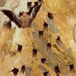Deer Cave Bats