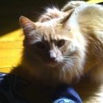 Jack The Cat Awareness Day JFK