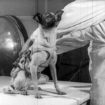 Laika First Dog In Space, November 3
