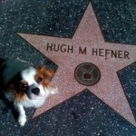 Crystal Harris Pet Dog Charlie