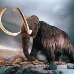 Woolly Mammoth Cloning