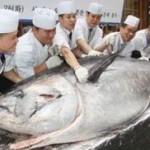 $736 000 Tuna