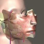 Face Transplant Details