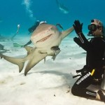 a98977_timing_1-shark-high-5